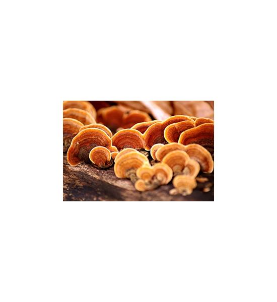 Shiitake, Reishi: houby pro zdraví