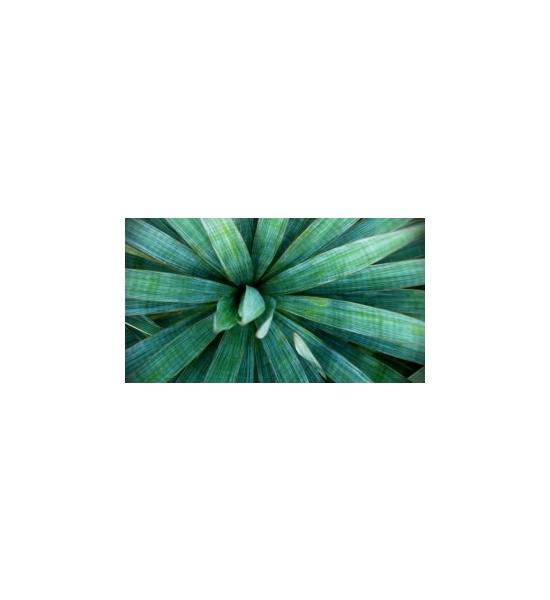 Yucca - detoxikační kůra
