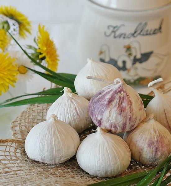 Česnek - léčivé účinky