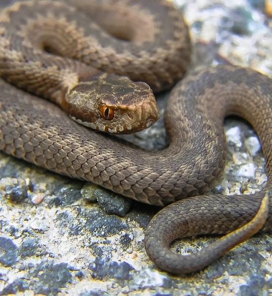 Mysteriózní hadí jed