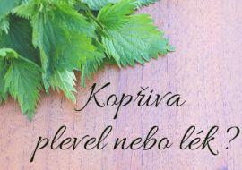 Kopřiva - plevel nebo lék ? Kopřiva obsahuje celou řadu důležitých látek, vitamíny skupiny B, vitamíny K, A, C, železo, měď, fla